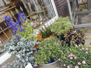 Blumen Brehmer in Immekeppel - Sommerangebote